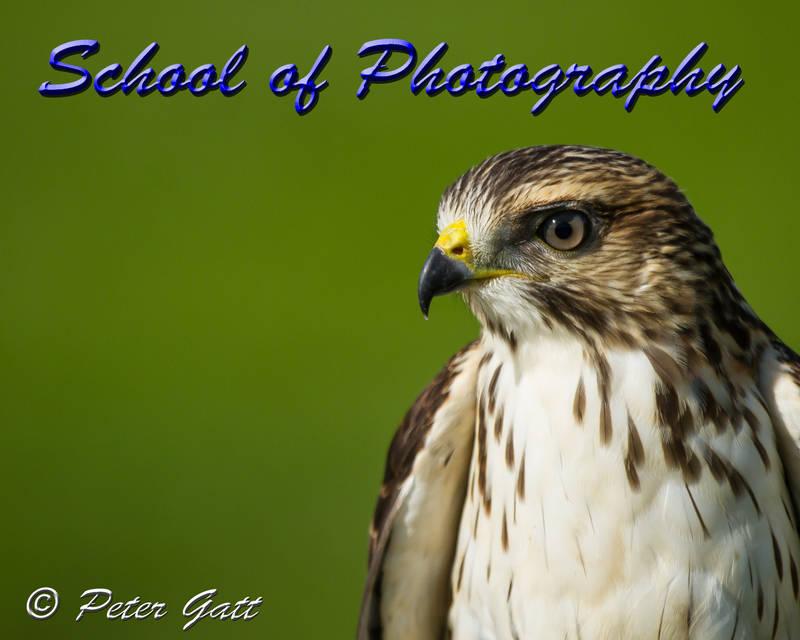 """School of Photography Workshop """" Birds of Prey"""""""